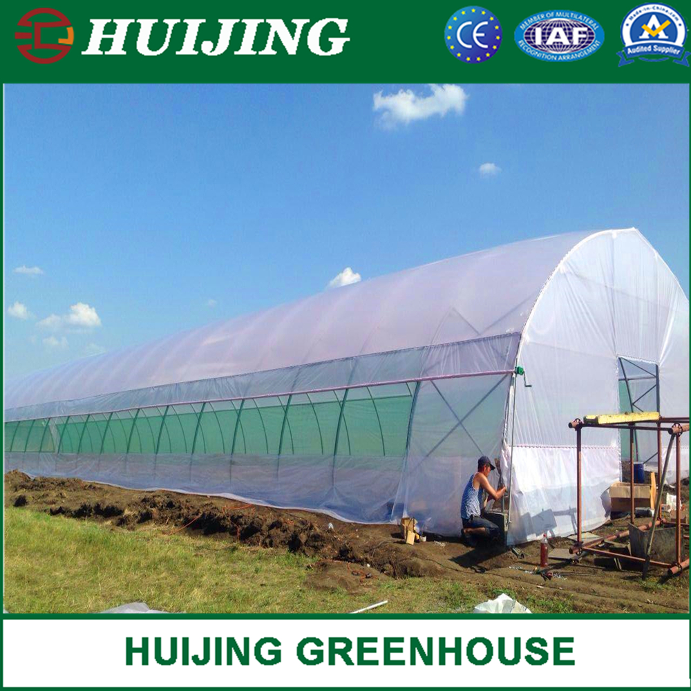 Agriculture/Farm/Multi-Span/Single-Span/Tunnel Plastic Film Greenhouse with Irrigation System for Tomato/Strawberry/Cucumber Planting