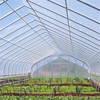 Hot sale Solar Venlo Plastic Polytunnel Hydroponic Agricultural Film Greenhouse for Vegetables/flowers/fruits/garden/tomato/crop/corn