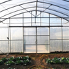 Hot Sale Tropical Multi Span Agriculture Greenhouse for Vegetable