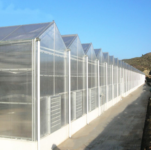 Customized Agricultural Tomato Hydroponics System Venlo Pc Polycarbonate Sheet Greenhouse