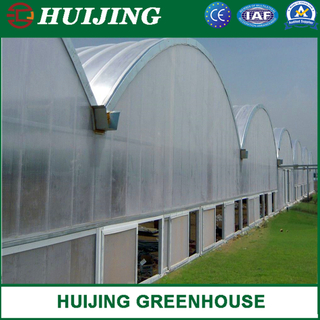 Polycarbonate Greenhouse Hydroponics System for Vegetables/Flowers/Fruit