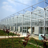 Excellent quality Heating System Multi-span Agricultural Hydroponic Greenhouse for Vegetables/flowers/fruits/garden/tomato/crop/corn