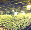 50W Hydroponic Red Blue White Full Spectrum Greenhouse UFO LED Grow Light