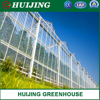 Plastic Film Green House/Polycarbonate Sheet PC/Hydroponic Venlo Glass/Greenhouse for Farming Agriculture of Vegetables/Flowers/Tomato/Garden
