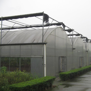 Multi-Span Plastic Film Cover Natural Ventilation Vegetable Greenhouse