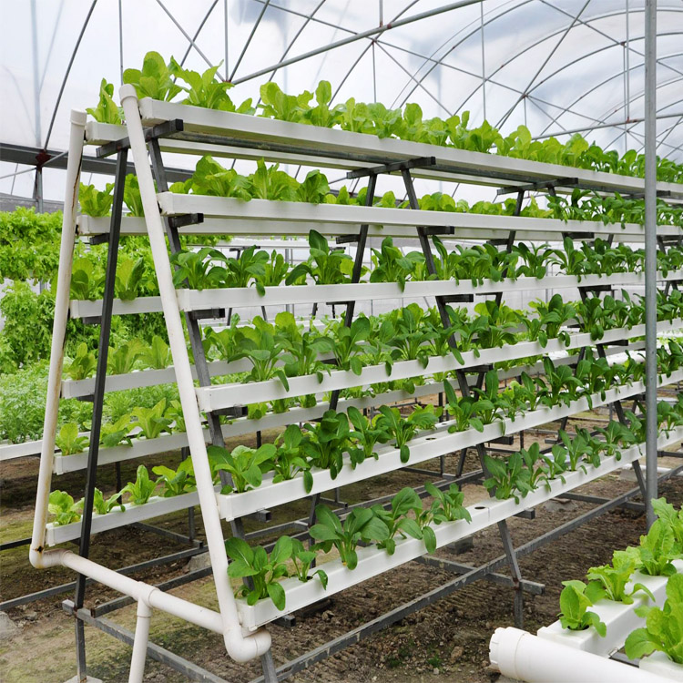 Greenhouse Gutter Hydroponic Growing Systems Nft Gully