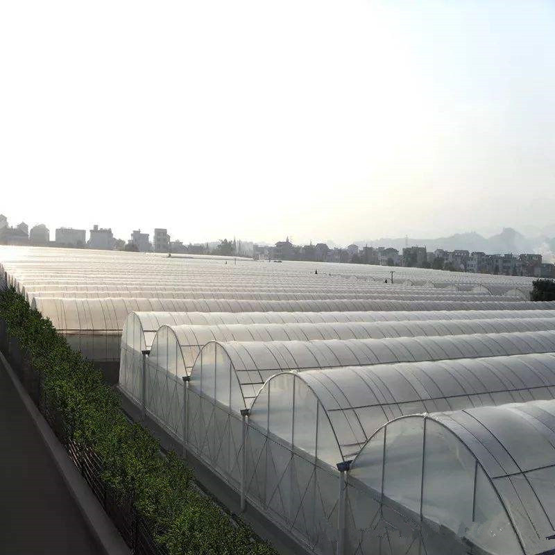 Plastic cheap price Solar Venlo Polytunnel Hydroponic Agricultural Film Greenhouse for Vegetables/flowers/fruits/garden/tomato/crop/corn