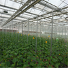 Hydroponic greenhouse with high quality Ventilation System Venlo Multi-span Agricultural Greenhouse for Vegetables/flowers/fruits/garden/tomato/crop/corn