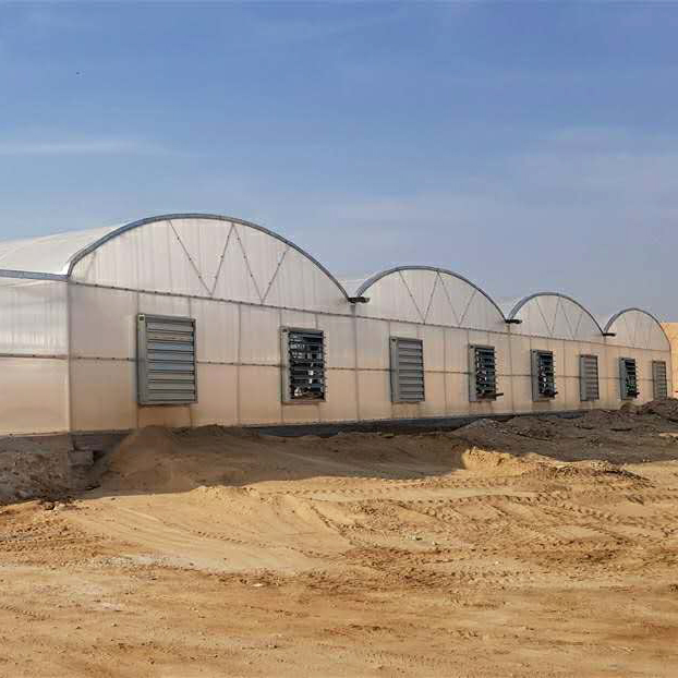Gothic/Arch Polycarbonate Greenhouse for Middle East