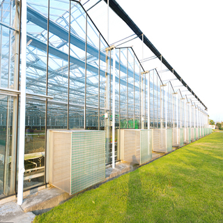 Dutch Venlo Glass Greenhouse Materials & Systems for Sale