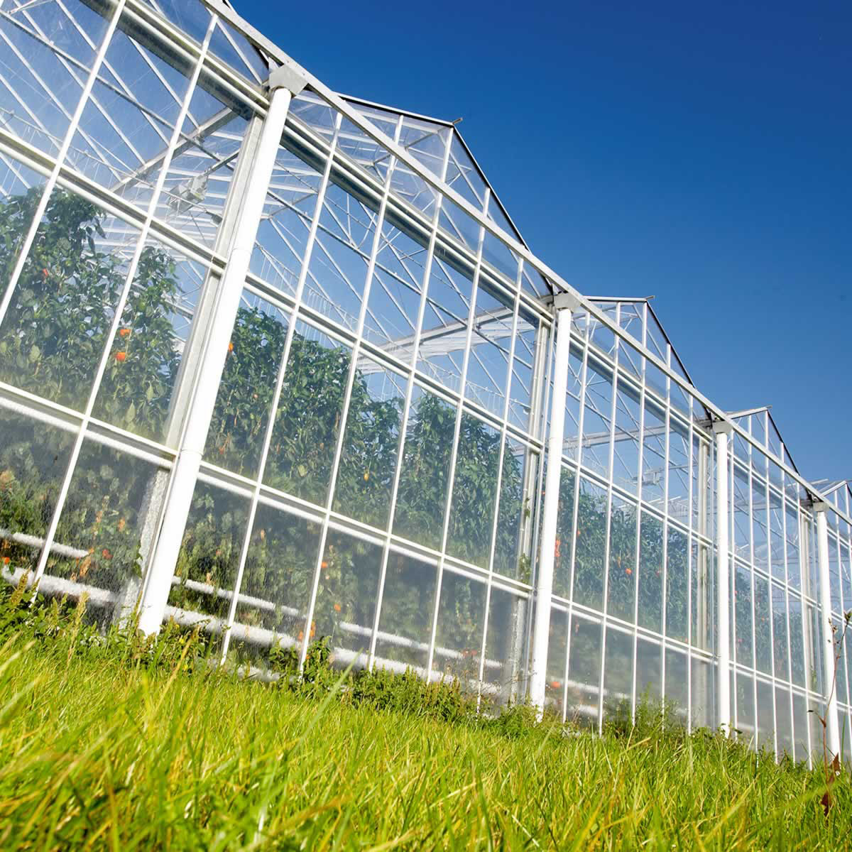 Complete Venlo Greenhouse Solution