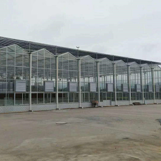 Hot Sale (polycarbonate) PC Greenhouse for Tomatoes