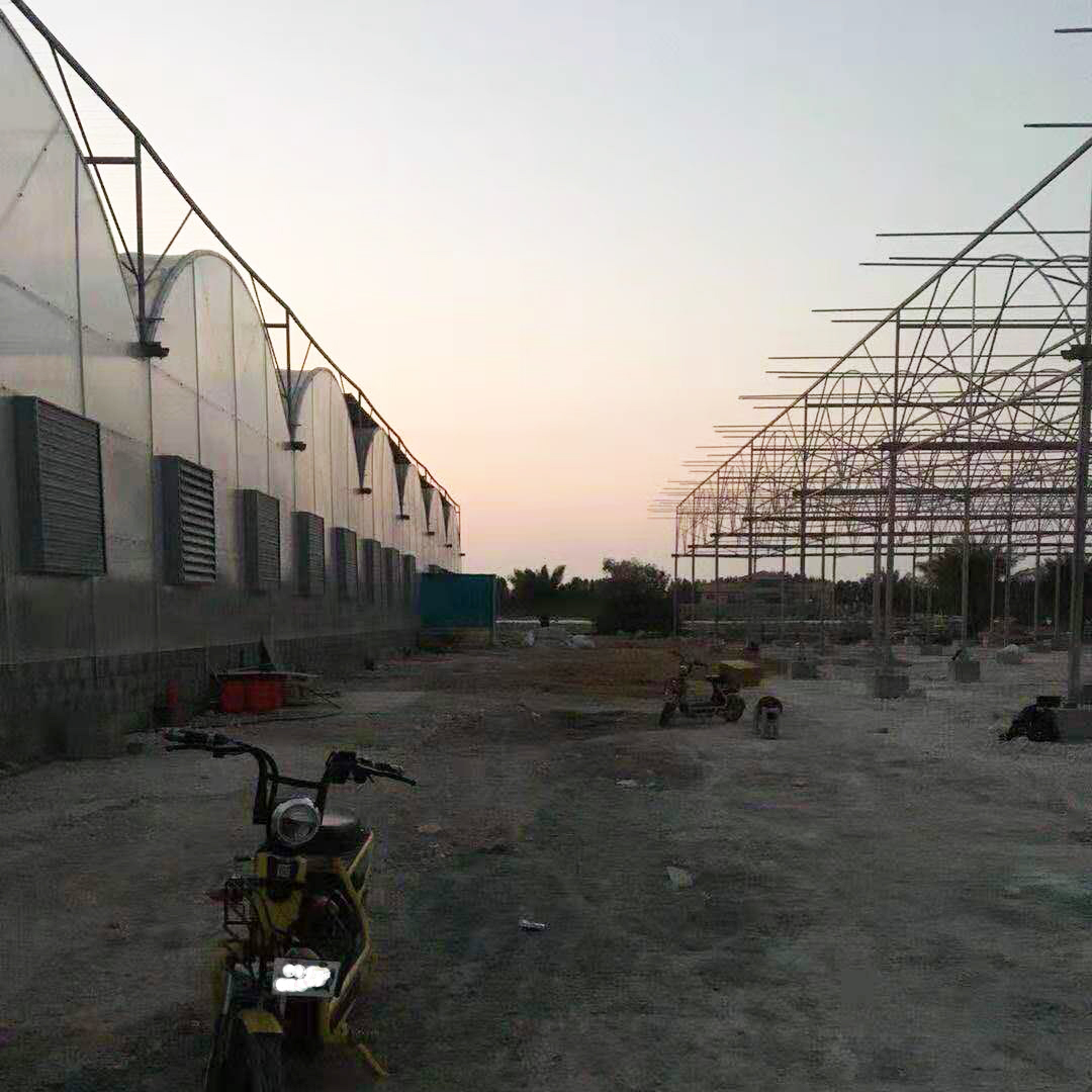 Multi-span Polycarbonate Greenhouse in Qatar