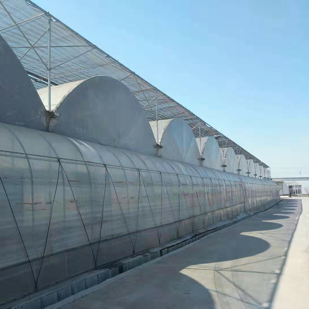 Multi-span PO Film Greenhouse in Uzbekistan