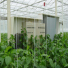 Automated Greenhouse Environment Control System Venlo Greenhouse Agricultural Greenhouse for Vegetables/flowers/fruits/garden/tomato/crop/corn
